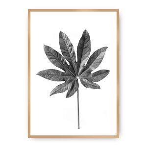 Plakát  Leaf Grey