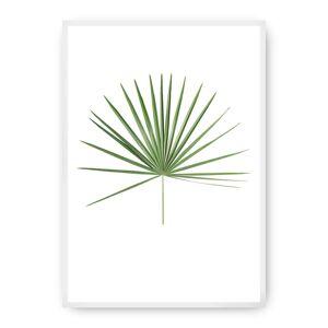 Plakát Tropical Leaf Green
