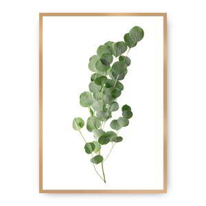Plakát Eucalyptus Green